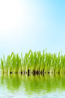Free Grass And Water Stock Images - 5345384