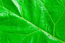 Free Leaf Texture Royalty Free Stock Images - 5345399