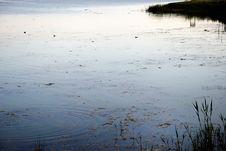 The Pond At Dawn (Mogan Park, Ankara/Turkey) Stock Image