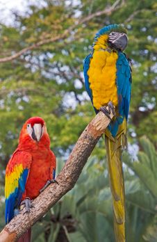 Free Two On A Perch Royalty Free Stock Image - 5345696