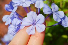 Free Fingers Holding A Flower Stock Photography - 5345962