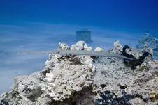 Smooth Cornetfish (fistularia Commersonii) Royalty Free Stock Photos