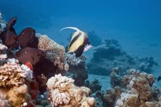 Free Coral And Fish Royalty Free Stock Photo - 5346335