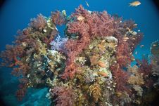 Free Coral And Fish Stock Photos - 5346673