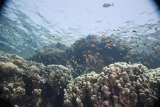 Free Coral And Fish Stock Photography - 5346712