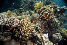 Free Coral And Fish Royalty Free Stock Photos - 5346768