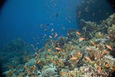 Free Coral And Fish Stock Images - 5346904