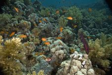 Free Coral And Fish Stock Photography - 5347222