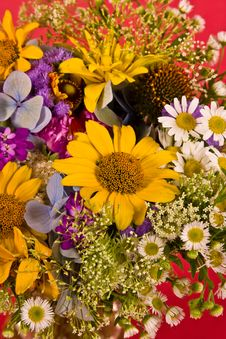 Free Flower Background Stock Image - 5347231