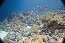 Free Coral And Fish Stock Photo - 5347240