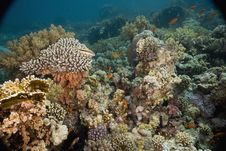 Free Coral And Fish Royalty Free Stock Photography - 5347257