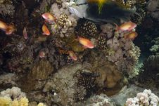 Free Coral And Fish Stock Photos - 5347293