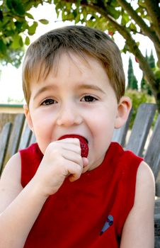 Boy Eating Strawberry Ii Royalty Free Stock Photos