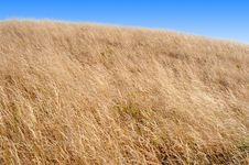 Free Boundless Grassland Royalty Free Stock Photography - 5348667