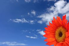 Free Orange Sunflower Stock Image - 5348851