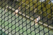 Free Tennis Inside Royalty Free Stock Images - 5349119