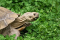 Free Tortoise Portrait Stock Image - 5353751