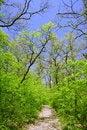 Free Hiking Trail Stock Photo - 5354950