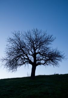 Free Tree Silhouette Against Of Evening Sky Royalty Free Stock Photos - 5350778