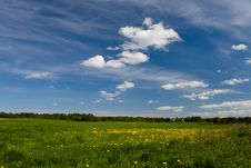 Field With Dandelions Royalty Free Stock Photography