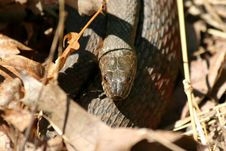 Free Snake Hiding In The Leaves Stock Photo - 5352320