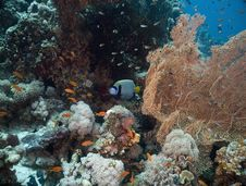 Free Seafan, Coral And Fish Stock Photography - 5353022