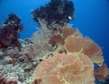 Free Seafan, Coral And Fish Royalty Free Stock Photos - 5353088