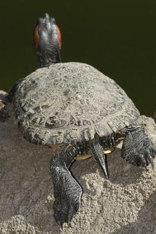 Free Tortoise Portrait Stock Image - 5353361