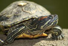 Free Tortoise Portrait Stock Images - 5353514