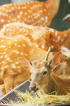 Free Spotted Deer Stock Photography - 5353552