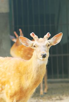 Free Spotted Deer Royalty Free Stock Image - 5353566