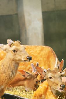 Free Spotted Deer Stock Images - 5353574