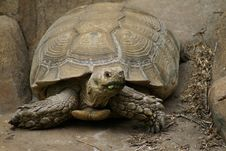 Free Tortoise Portrait Stock Images - 5353614