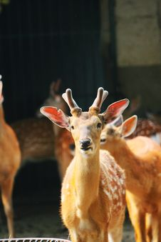Free Spotted Deer Stock Photo - 5353830