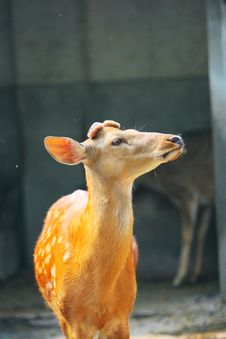 Free Spotted Deer Stock Images - 5353874