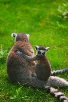 Free Monkey Stock Photo - 5353880