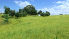 Free Green Field With Blue Sky Royalty Free Stock Image - 5354076