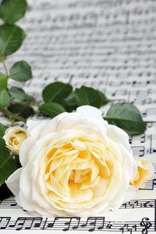 Free Rose Stock Image - 5354301