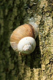 Free Snail On The Tree Royalty Free Stock Photos - 5354678