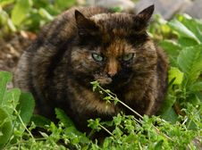 Free Cat In The Grass Stock Image - 5355051