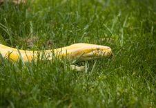 Free Albino Python Royalty Free Stock Photo - 5355545