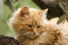 Free Cat On A Tree Stock Image - 5356071