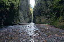 Free Oneonta Gorge Stock Images - 5356174
