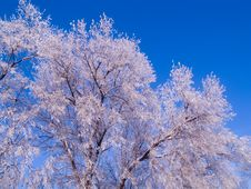 Free Frosted Tree Tops Stock Photos - 5356193