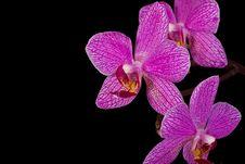 Free Pink Poison Stock Photos - 5356653