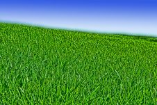 Free Green Grass Blue Sky Royalty Free Stock Image - 5356866