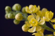 Free Yellow Blossom Twig Stock Images - 5356914