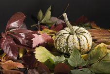 Free Pumpkin Royalty Free Stock Image - 5357396