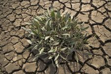Free Plant Growing In Cracked Dried Mud Royalty Free Stock Images - 5357539