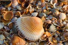 Free Sea-shell Texture Stock Photography - 5357752